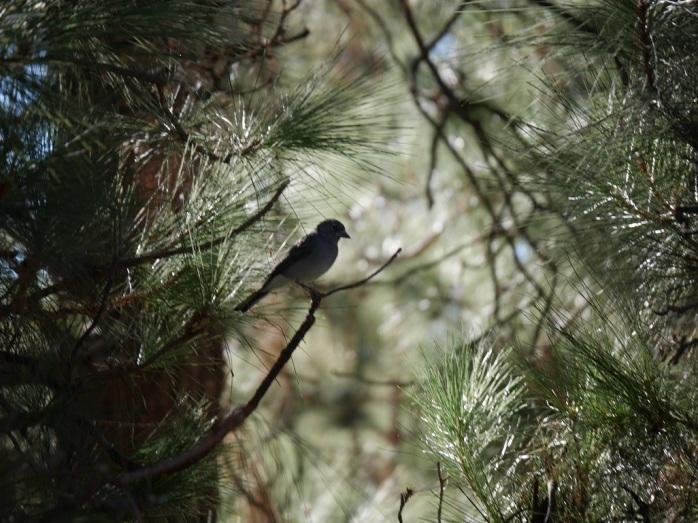 Yksinäinen lintu